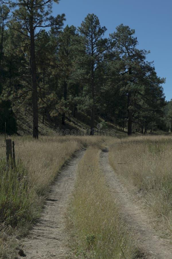 A dirt road near Lake Roberts, New Mexico. royalty free stock image