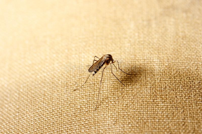 One mosquito sits on clothes. Mosquito wants to suck blood royalty free stock photography