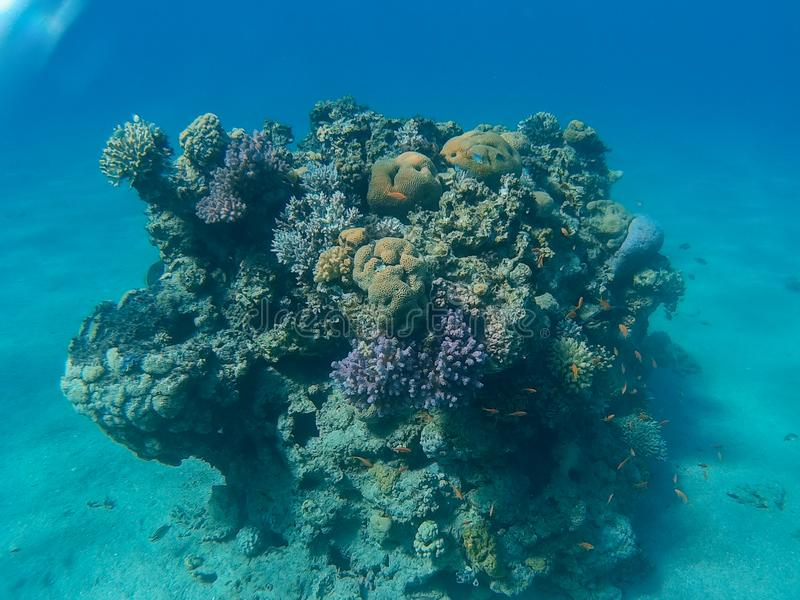 Coral Reef in Eilat royalty free stock photography