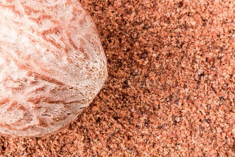 One nutmeg whole and powder isolated on white background.  royalty free stock photography