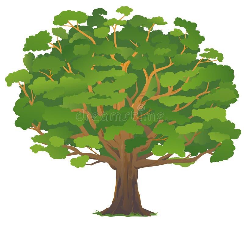 Free One Old Oak Tree Isolated Stock Photo - 160189480