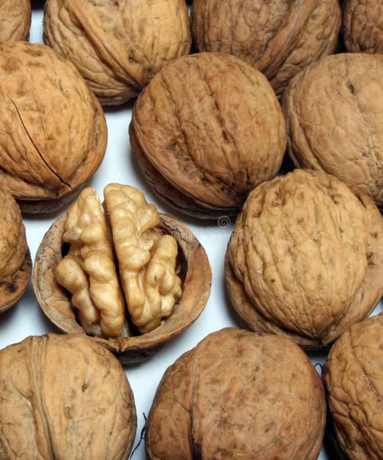 Download One open nut stock image. Image of cracked, season, close - 10504799