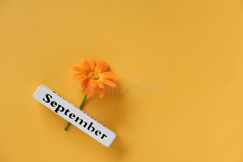 One orange calendula flower and calendar autumn month September on yellow background. Top view Copy space Flat lay Minimal style. royalty free stock photo