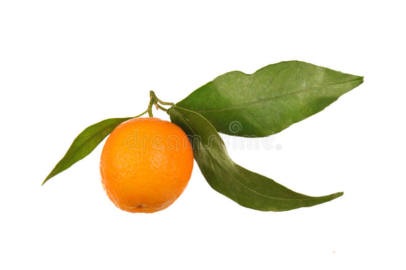 Download One orange with leaf stock image. Image of peel, isolated - 22269885
