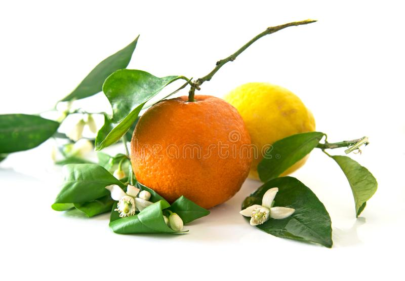 One orange and a lemon with the orange blossoms, isolated royalty free stock photo