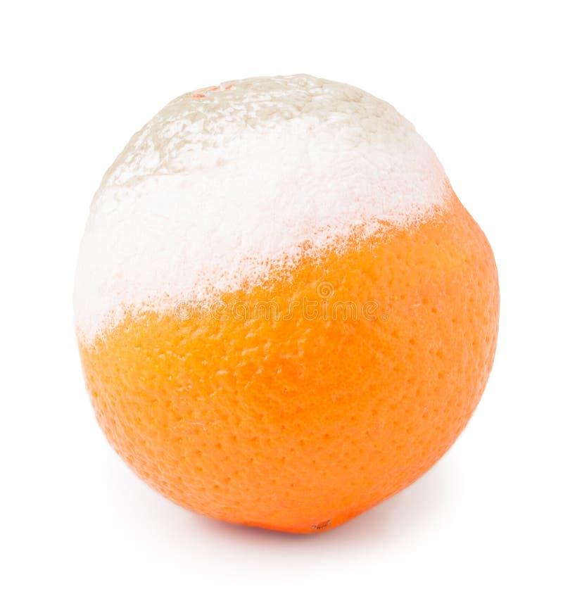 One orange with mold isolated on white background.  royalty free stock images