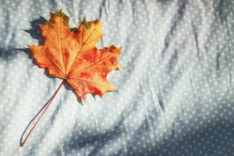One Orange Yellow Maple Leaf on grey vintage Fabric. royalty free stock image