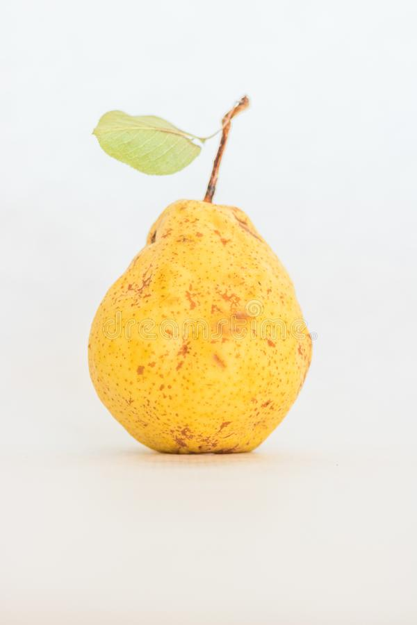 One organic ripe yellow skinned pear with a few small spots so it looks real stock photo