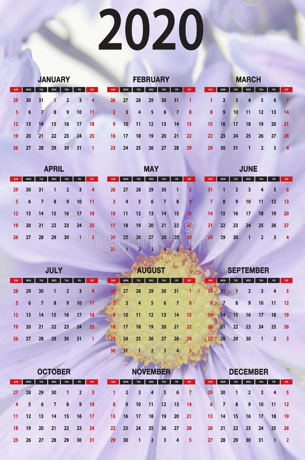 2020 One Page Calendar Black Letters Numbers Blue Daisy Background royalty free stock images