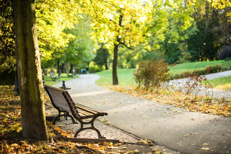One Peaceful Place. Bench in the Park in Summer Time. One Silent and Peaceful Place royalty free stock photos