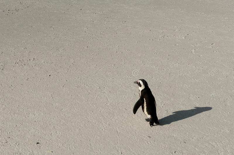 One penguin walking stock photos