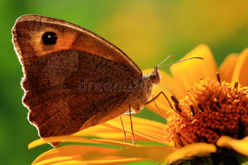 Butterfly on a flower. stock image