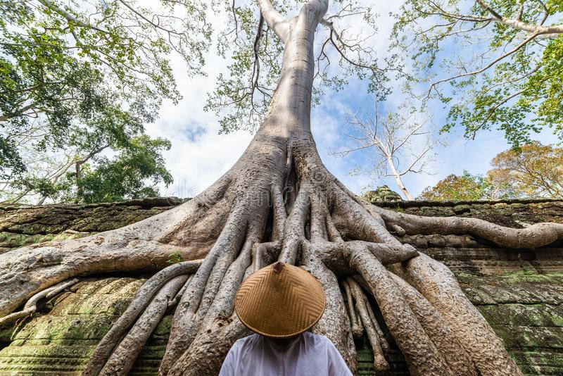 One person looking at Ta Prohm famous jungle tree roots embracing Angkor temples, revenge of nature against human buildings,. Travel destination Cambodia stock photos