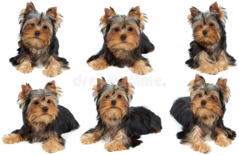 One photo session of the dog stock photos