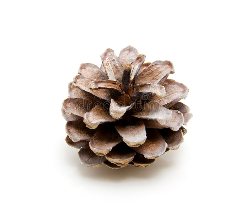 Download One Pine Cone Stock Image - Image: 12253711