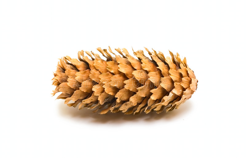 Download One pine cone stock photo. Image of object, coniferous - 7083418