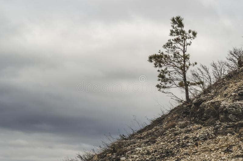 One pine on the hillside near the Zhiguli Mountains. Reserve Samara region. One pine on the hillside near the Zhiguli Mountains. Reserve Samara region Russia stock photography