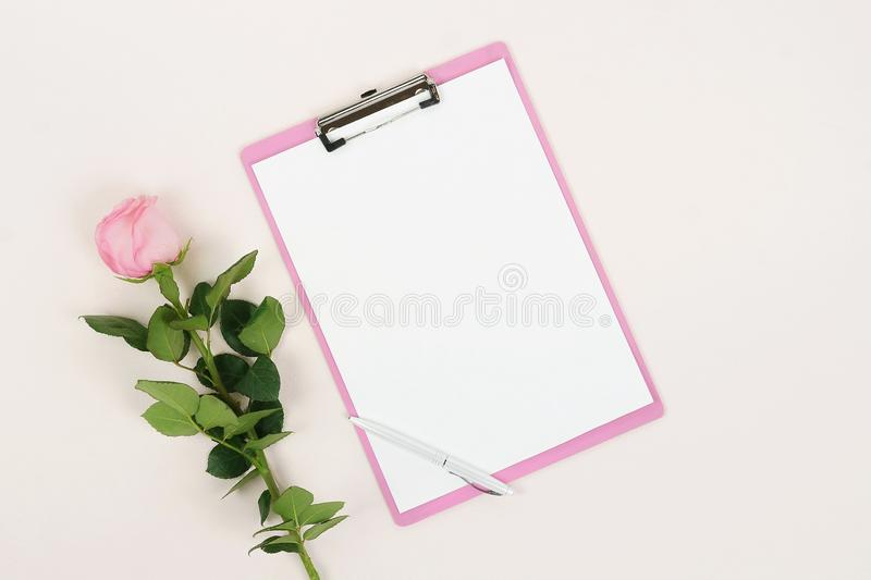 One pink rose flower and clipboard mock up for text. Festive minimal background. One pink rose flower and clipboard mock up for text on pale pink background stock photos