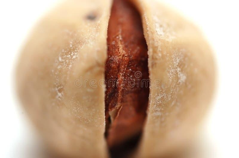 One pistachio stock photo