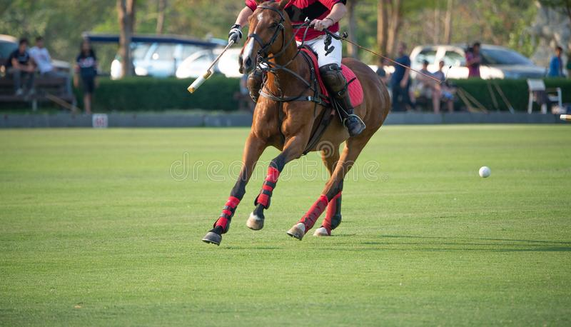One Polo player and horse royalty free stock image