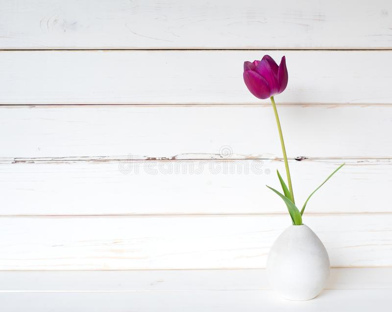 One Purple Spring Tulip in a Small Modern Light Gray Vase on a White Table and against distressed shiplap wood board background wi stock images