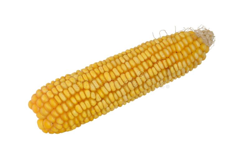 Fresh cob corn isolated at white closeup stock images