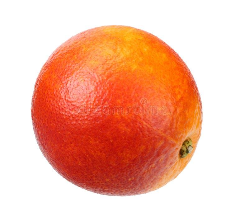 one red blood orange fruit isolated on white background stock image
