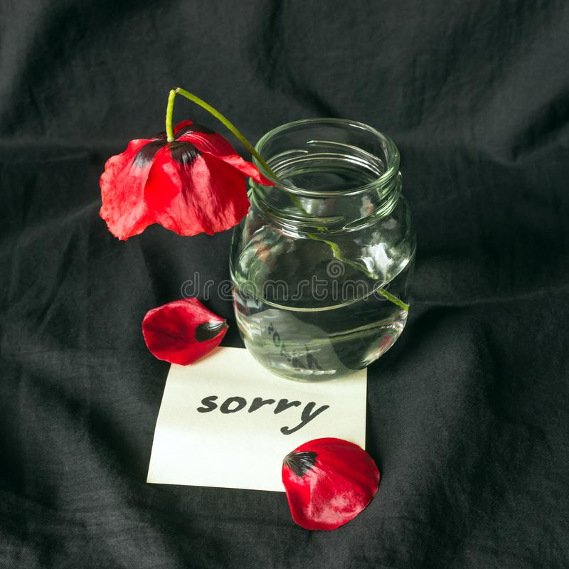 One red poppy flower broken on dark background. Note of apology- Sorry, please forgive me. royalty free stock photo