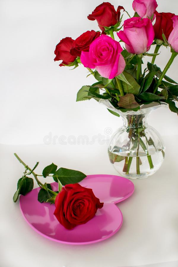 One red rose on pink heart plate in front of roses royalty free stock photos