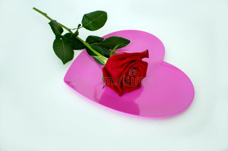 One red rose placed on top of pink heart shaped plate royalty free stock photo