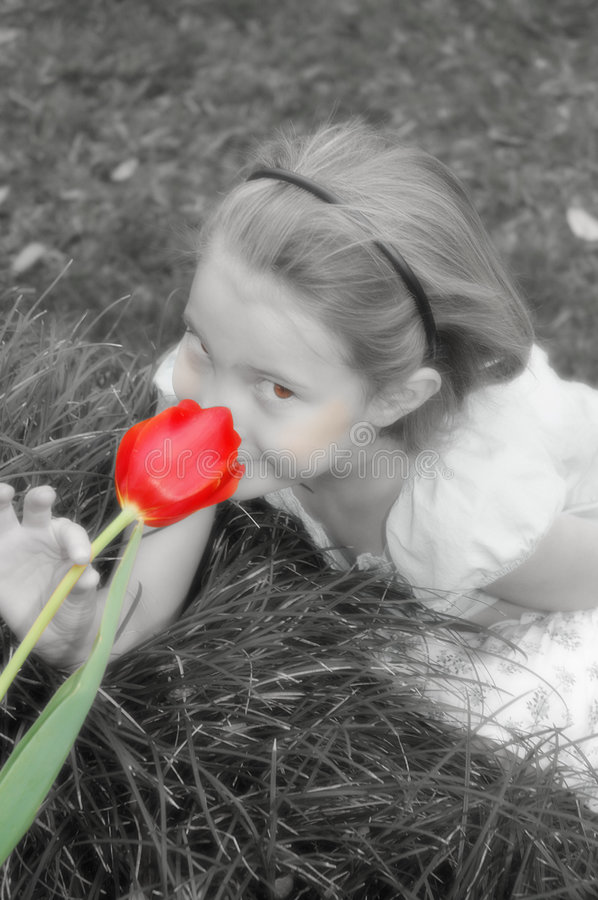 One Red Tulip. Black and white dreamy version of little girl smelling one red tulip. Flower is in color, rest of picture is black and white and some desaturation stock photos