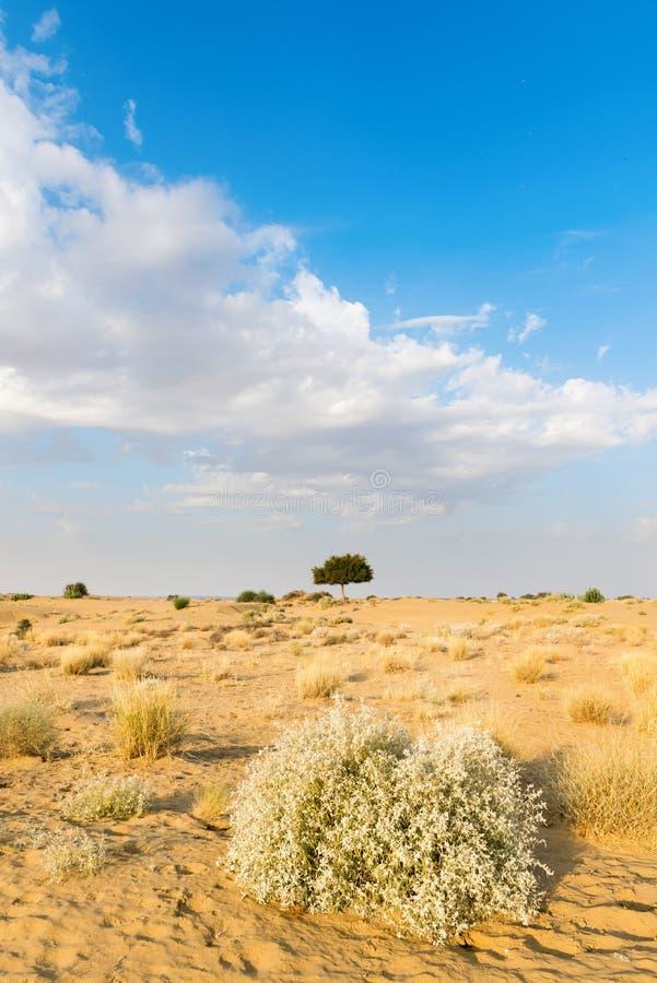 Download One Rhejri Tree In Desert Undet Blue Sky Stock Photo - Image: 29762826
