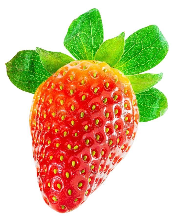 One ripe strawberry isolated on white background royalty free stock photos