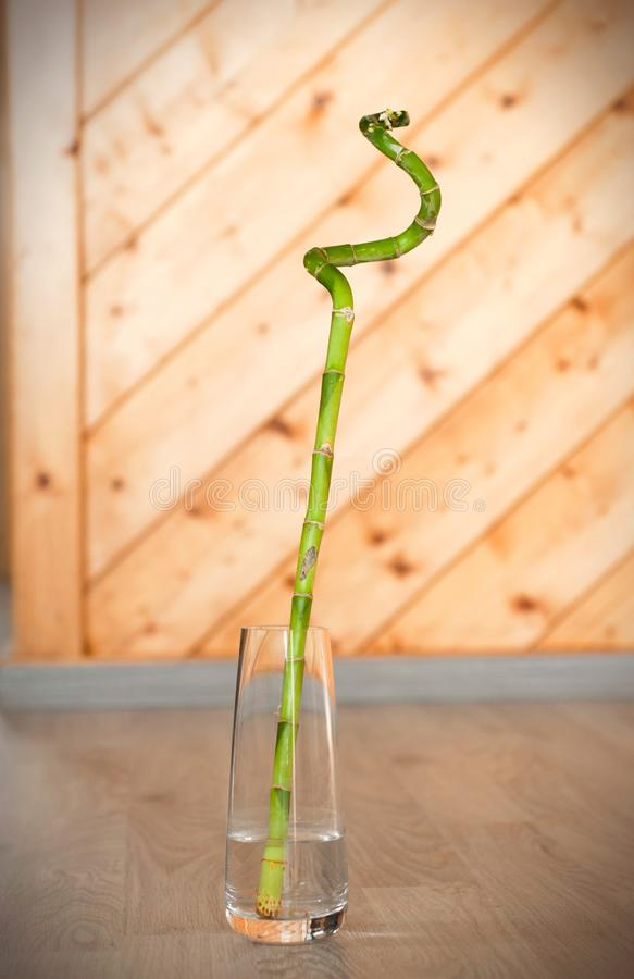 One root bamboo in a clear glass vase on the floor. One root bamboo in a clear glass vase. Lucky bamboo stock photo