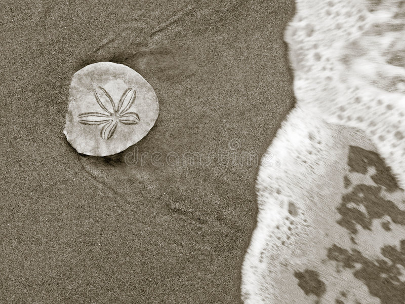 One (sand) Dollar stock photography