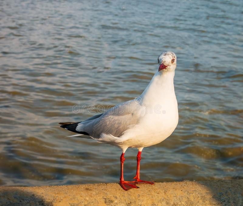 Seagull is on a concrete bridge. One seagull is on a concrete bridge stock photos