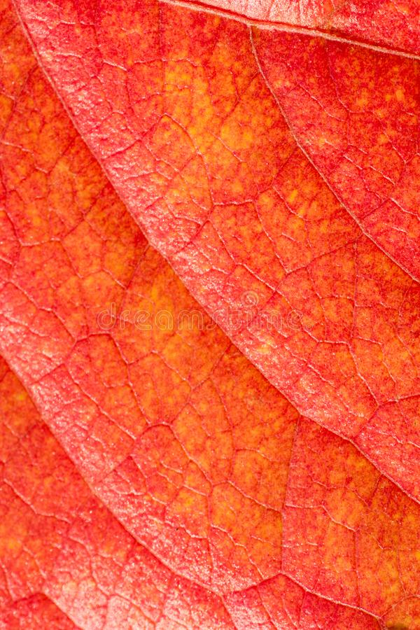One separate dry leaf in close up view stock photos
