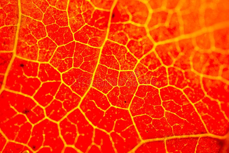 One separate dry leaf in close up view royalty free stock photography