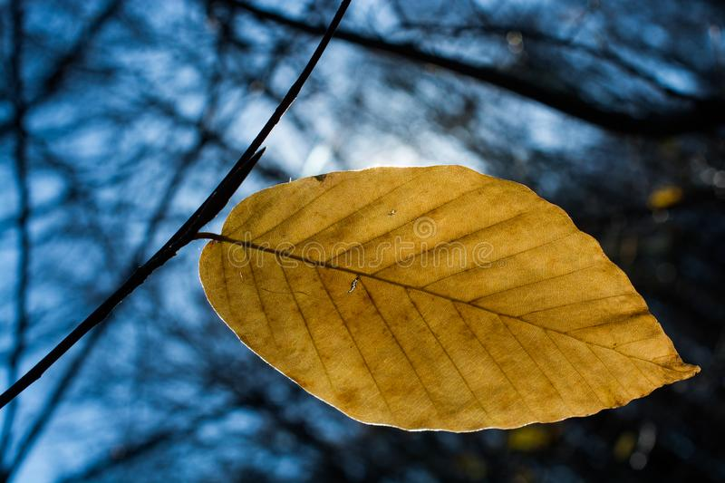 One separate dry leaf in view royalty free stock image