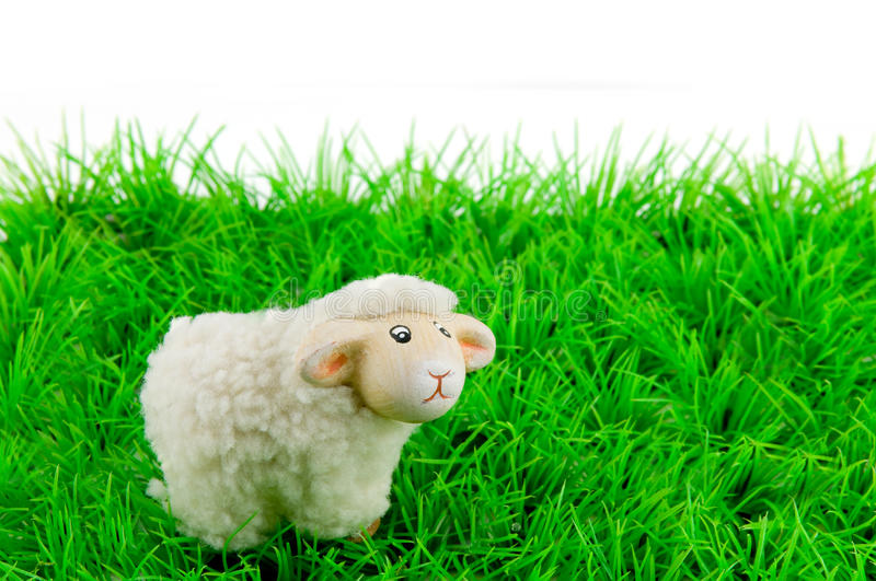 One sheep on green grass. Isolated on white background stock image