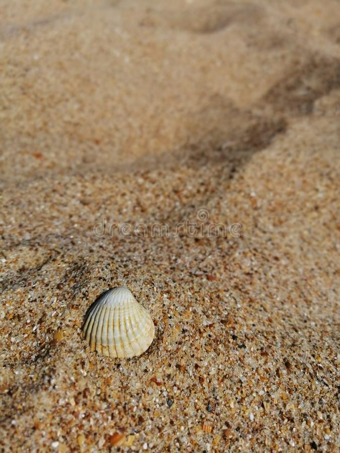 One shell on the yellow sand royalty free stock photos