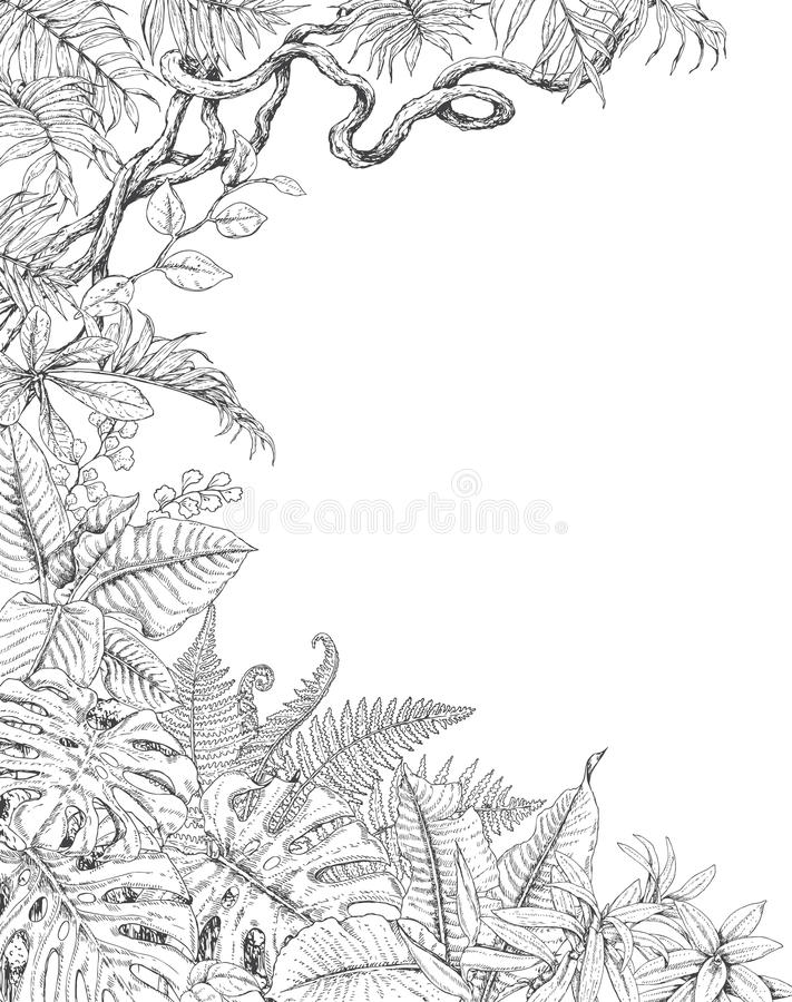 One Sided Background with Tropical Plants royalty free illustration