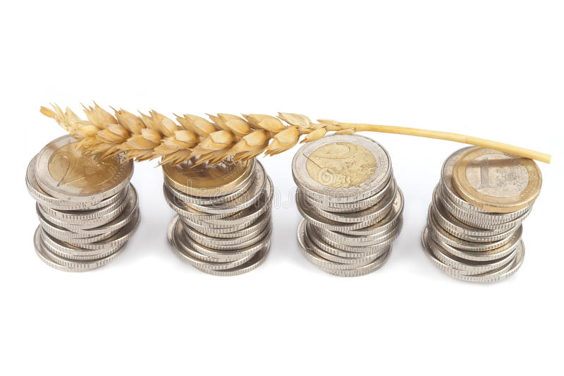One single corn stalk lies on Euro coins. Isolated royalty free stock photo