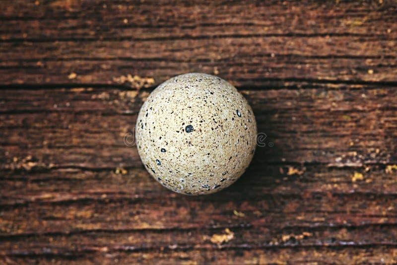 One single quail egg stock photo