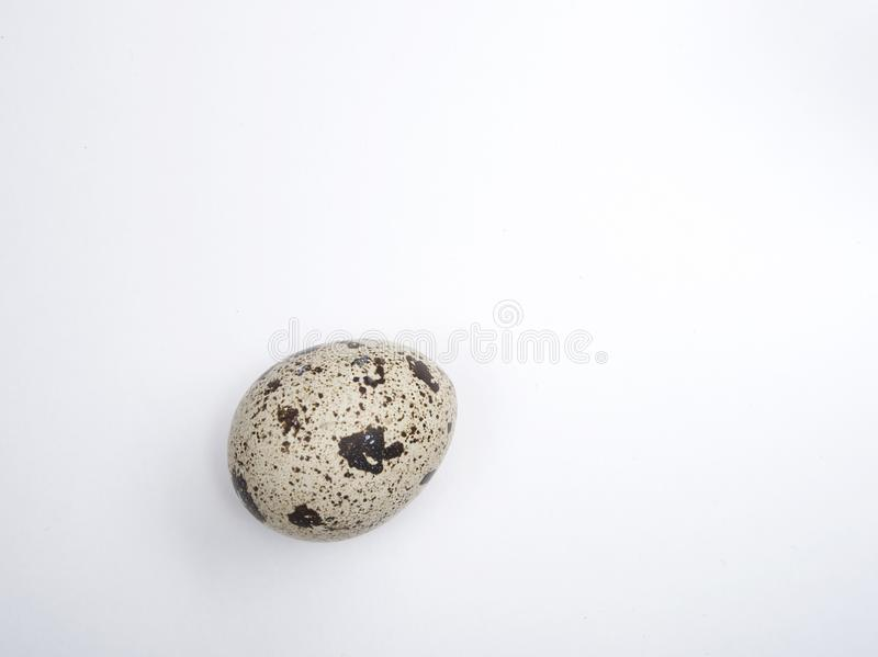 One small beige quail egg stock photo