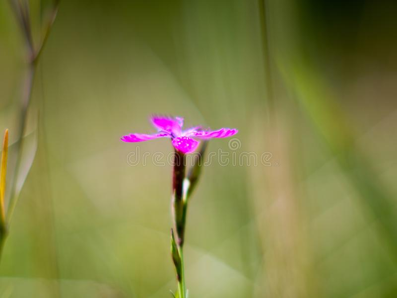 One small fillet of flowers among green grasses.  stock images