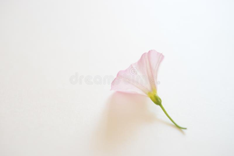 One small tender flower on the white paper royalty free stock images