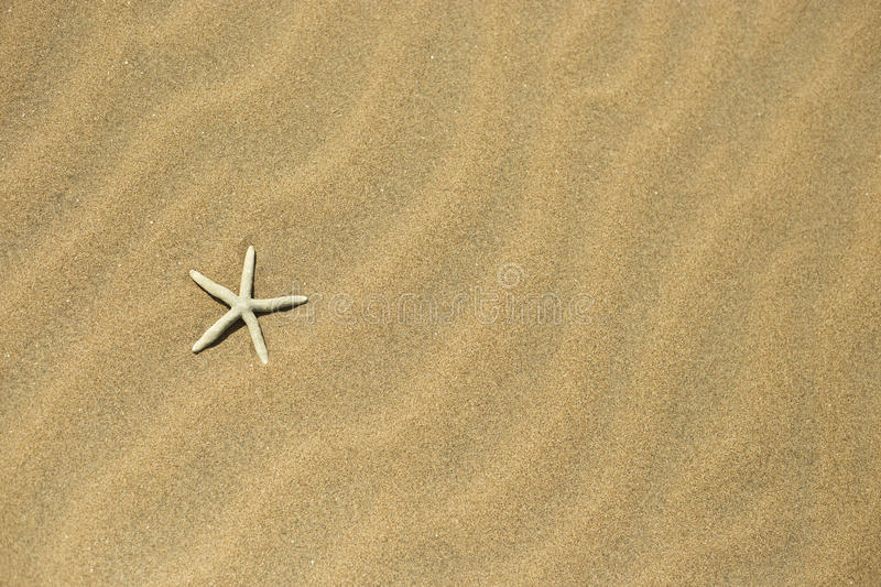 One starfish in the sand stock photo