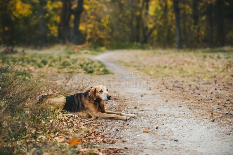 One street dog lie on the grass in cold autumn day. The problems of stray dogs royalty free stock photos