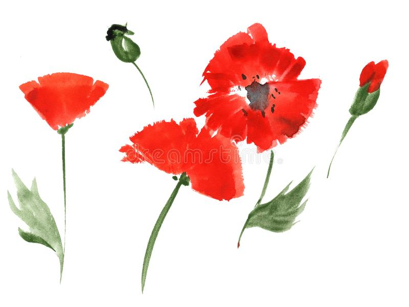 Red poppy flowers by watercolor stock illustration illustration of download red poppy flowers by watercolor stock illustration illustration of flower drawing 120058830 mightylinksfo